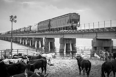 Of Rodeo Bucking Bulls Photograph - Seascape Bsl E60f by Otri Park