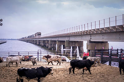 Of Rodeo Bucking Bulls Photograph - Seascape Bsl E60g by Otri Park