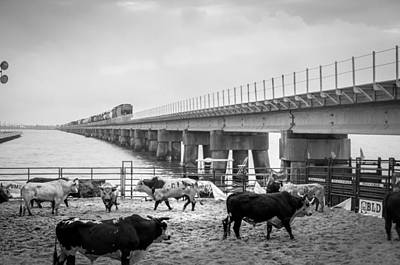 Of Rodeo Bucking Bulls Photograph - Seascape Bsl E60h by Otri Park