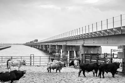 Of Rodeo Bucking Bulls Photograph - Seascape Bsl E60j by Otri Park