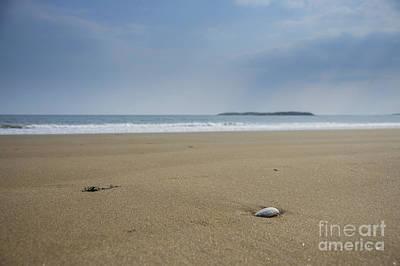Photograph - Lone Seashell by Alana Ranney