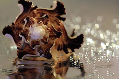 Photograph - Seashell And Sparkles by Angela Murdock