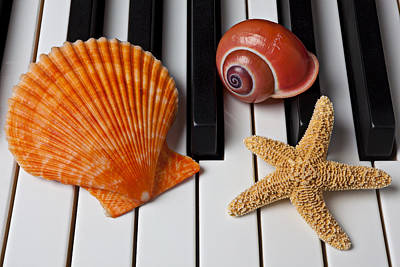 Keyboards Photograph - Seashell And Starfish On Piano by Garry Gay