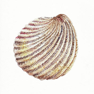 Seashells Painting - Seashell Art Beach Treasure Sea Shell Iv by Irina Sztukowski