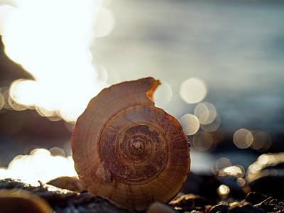 Photograph - Seashell Bokeh by Brad Boland