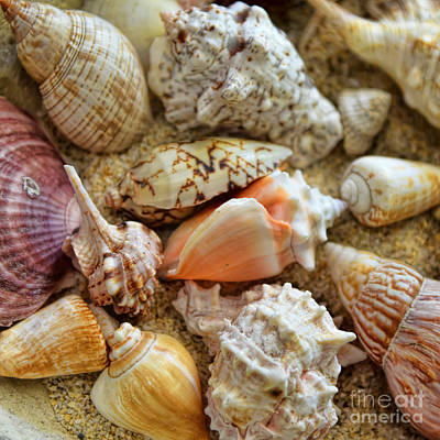 Photograph - Seashell Composition Number One by Olga Hamilton