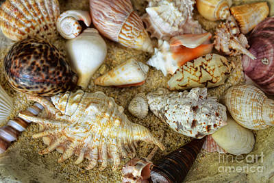 Photograph - Seashell Composition Number Two by Olga Hamilton