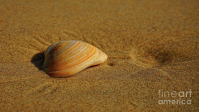 Photograph - Seashell Crater by Roxie Crouch