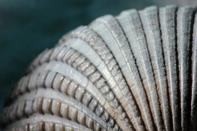 Photograph - Seashell Designs by Angela Murdock