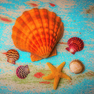 Photograph - Seashell Dreams by Garry Gay