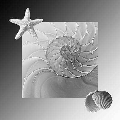 Photograph - Seashell Fantasy In Black And White by Gill Billington