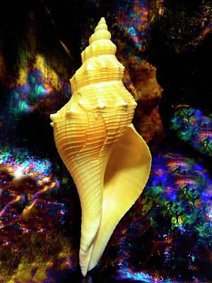 Seashell Art Print by Frank Wilson