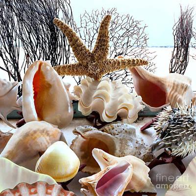Seashell Galore Art Print