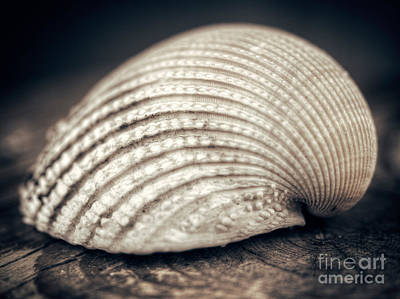 Photograph - Seashell by Giuseppe Esposito