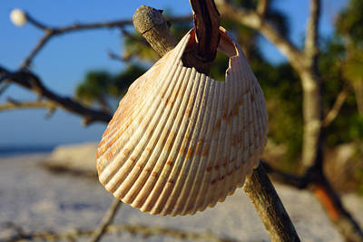 Photograph - Seashell Hanging On Dead Mangrove Tree At Barefoot Beach by Robb Stan