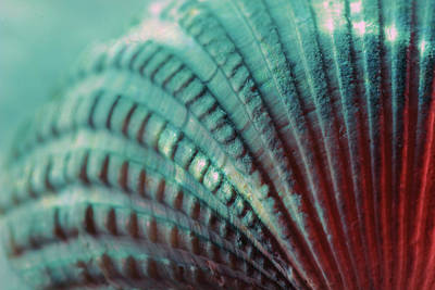Photograph - Seashell Macro by Angela Murdock