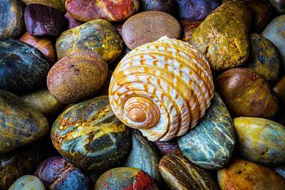 Seashell On River Rocks Art Print by Garry Gay