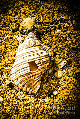 Photograph - Seashell On Sandy Ground by Jorgo Photography - Wall Art Gallery
