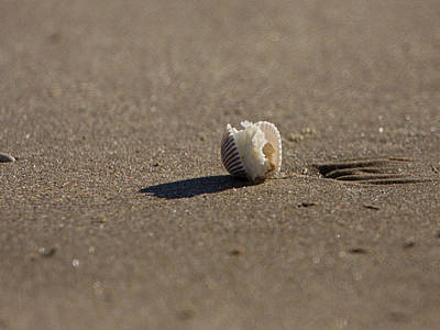 Photograph - Seashell On Sea Shore by Charles McKelroy