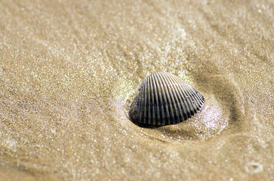 Photograph - Seashell On The Beach by Debra Martz