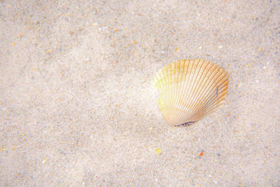 Photograph - Seashell by Pamela Williams
