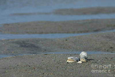 Photograph - Seashell Pile by Jennifer White