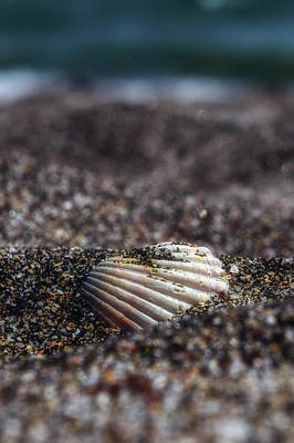 Photograph - Seashell by Plamen Petkov