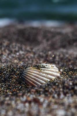 Photograph - Seashell by Plamen Petkov