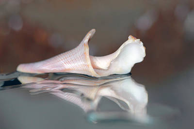Photograph - Seashell Reflections by Angela Murdock