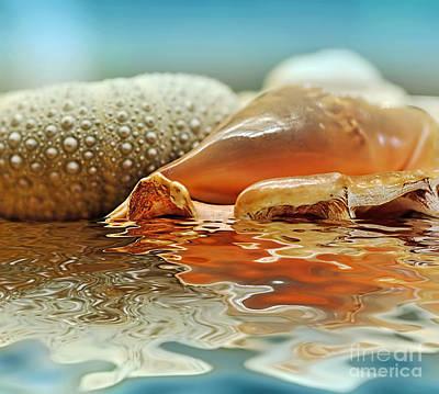Seashell Reflections On Water Art Print