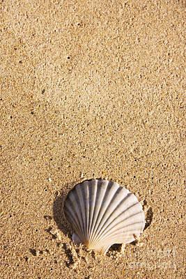 Photograph - Seashell by Jorgo Photography - Wall Art Gallery
