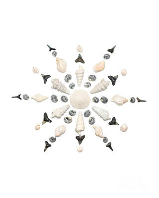 Seashell Snowflake 3 Art Print by Jennifer Booher