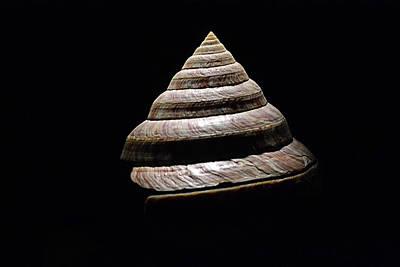 Photograph - Seashell Spiral On Black by Nadalyn Larsen