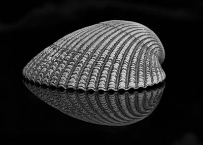 Photograph - Seashell Study by Morgan Wright