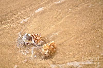 Photograph - Seashell Turbulence by Kaye Menner