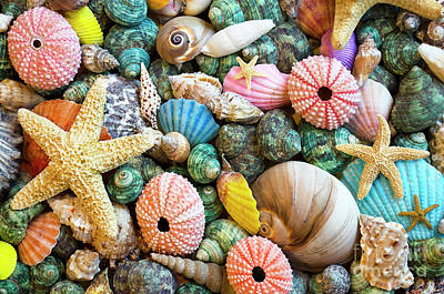 Photograph - Seashells 2 by Bob Christopher