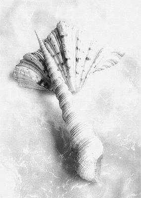 Photograph - Seashells #2 In Black And White by Louise Kumpf