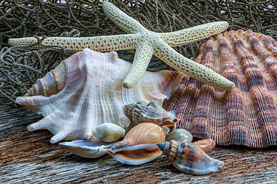 Photograph - Seashells 2 by Randy Walton