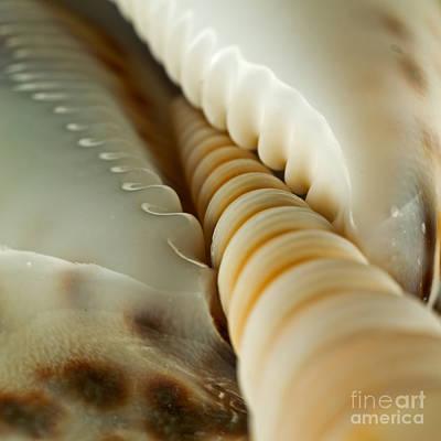 Photograph - Seashells 20090820 7 by Rolf Bertram