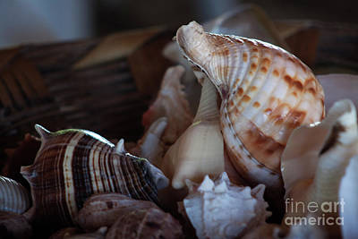 Photograph - Seashells  by Ana Mireles