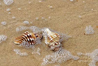 Seashells And Bubbles 2 Art Print by Kaye Menner