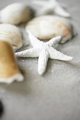 Seashells And White Starfish On Sand Art Print by Gillham Studios
