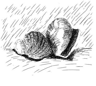 Seashell Drawing  - Seashells by Ava Shelton