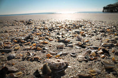 Photograph - Seashells By The Seashore by Jessica Brown