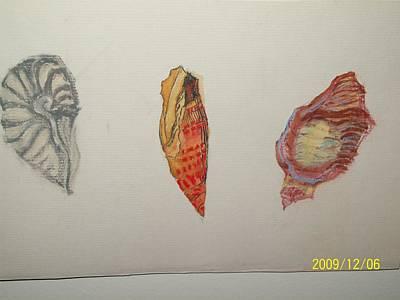 Seashells By The Seashore Art Print by Nancy Caccioppo