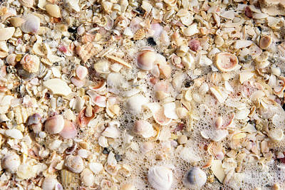 Photograph - Seashells By The Seashore by Sandy Molinaro