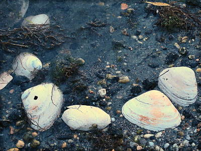 Photograph - Seashells By The Water by Colleen Kammerer