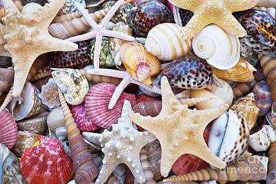 Photograph - Seashells by Delphimages Photo Creations