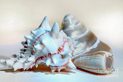Photograph - Seashells by Eleni Mac Synodinos