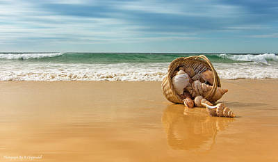 Digital Art - Seashells Forster 061 by Kevin Chippindall